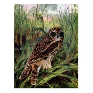 Sumpfohreule in den Sumpfgebieten Postkarte