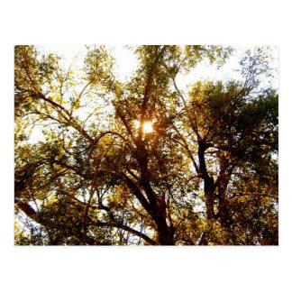 Sun, der durch Baumast-Postkarte scheint Postkarte