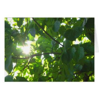 Sun durch hellgrünes Blätter Karte