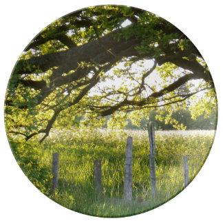Sun-Lit-Feld und Bäume Porzellanteller