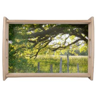 Sun-Lit-Feld und Bäume Tablett