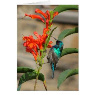 Sunbird auf orange Blume Karte