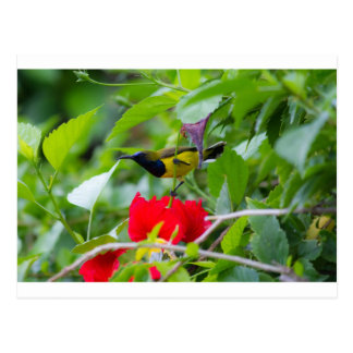 Sunbird Postkarte