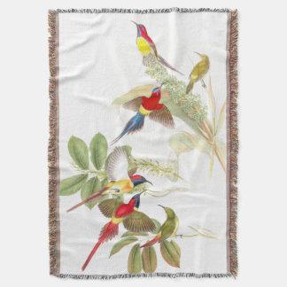 Sunbird-Vogel-Tier-Tiere botanisch Decke