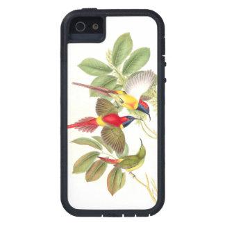 Sunbird-Vogel-Tier-Tiere botanisch iPhone 5 Etui