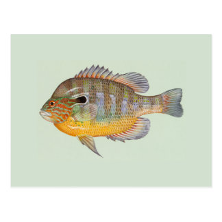Sunfish durch Duane Raver Postkarte