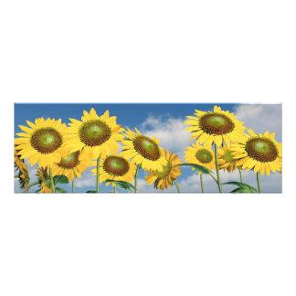 Sunflowers Fotodruck