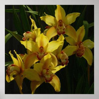 Sunlit gelbe Orchideen-atemberaubendes Blumen Poster