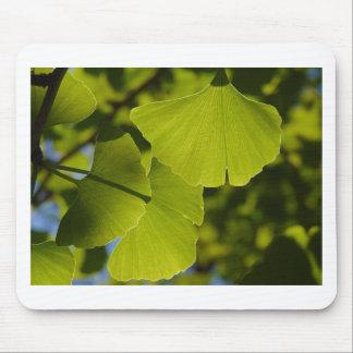 Sunlit Ginkgo-Blätter Mousepad