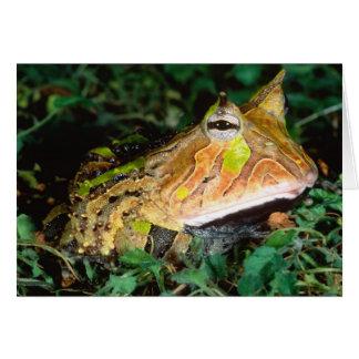 Surinam-Horn-Frosch, Ceratophrys cornuta, gebürtig Karte
