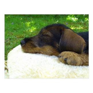 Süße Baby-Dackel, Schlafenwelpe Postkarte