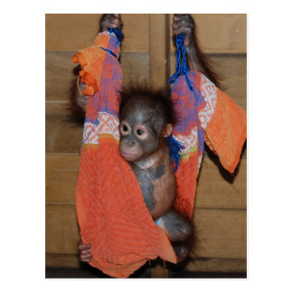 Süße Baby-Orang-Utan Rettung Postkarte