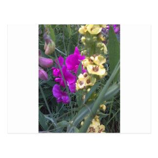 Süße Erbse und Mullein Blume Postkarte
