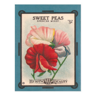 Süße Erbsen Postkarte