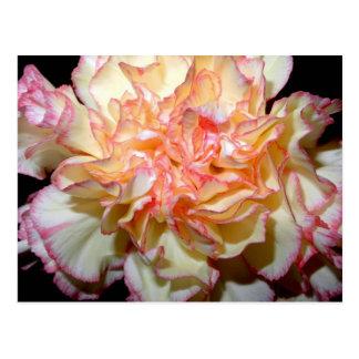 Süße Gartennelken-empfindliches Blumen Postkarten