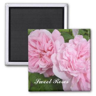 Süße rosa Rosen Quadratischer Magnet