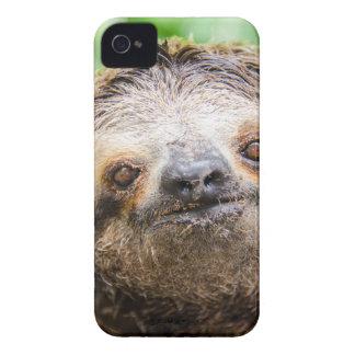 Süße Trägheit iPhone 4 Case-Mate Hülle