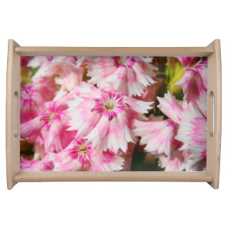 Süße William-Blumen Tablett