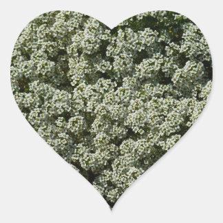 Süßer Alyssum-Blumen-köstliches weißes Blumen Herz-Aufkleber