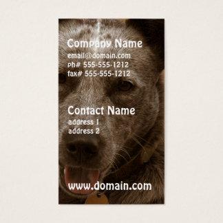 Süßer australischer Vieh-Hund Visitenkarte