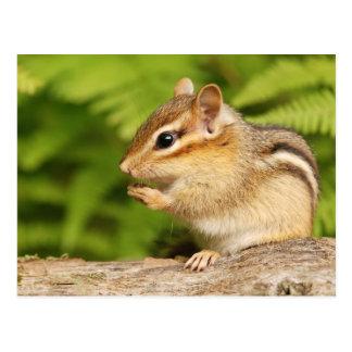 süßer Baby Chipmunk mit Imbiss Postkarte