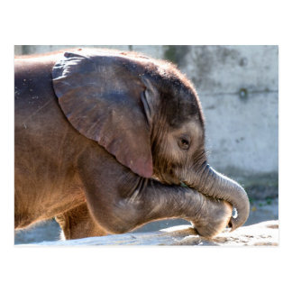 Süßer Baby-Elefant Postkarte
