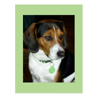 Süßer Beagle genannt Spot Postkarte