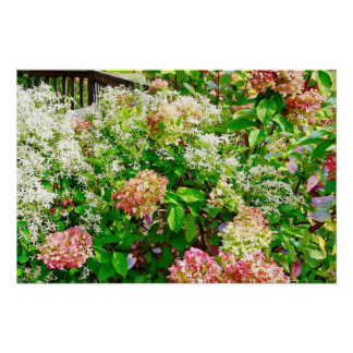 Süßer HerbstClematis und rosa Hydrangea Poster