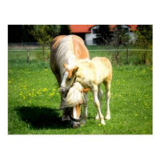 süßer Pferdeentwurf Postkarte