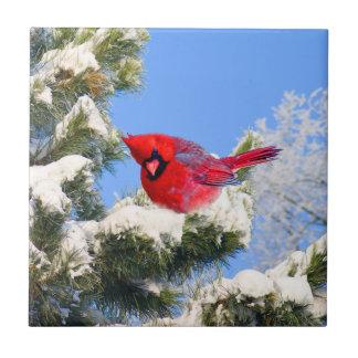 Süßer roter Kardinal im Schnee bedeckte Baum Fliese