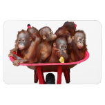 Süßes Baby-Gesichts-Fass Affen Magnet