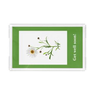 Süßes Gänseblümchen auf dem Grün Acryl Tablett