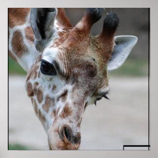 Süßes Giraffen-Plakat Poster