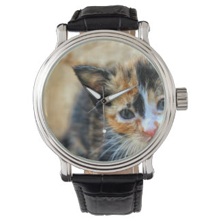 Süßes Kätzchen, das SIE betrachtet Uhr