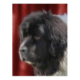 Süßes Neufundland-Hundegesicht Postkarte