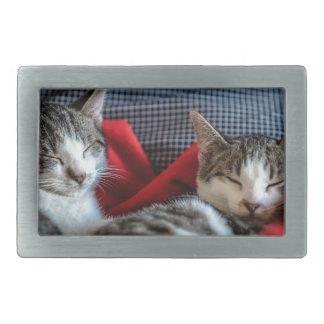 Süßes Schlafen Kätzchen Rechteckige Gürtelschnalle