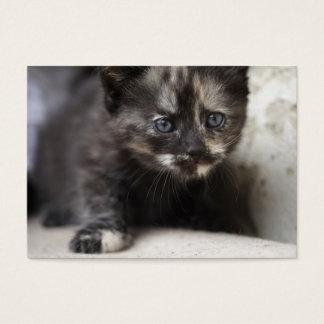 Süßes schüchternes Schildpatt-Baby Visitenkarte