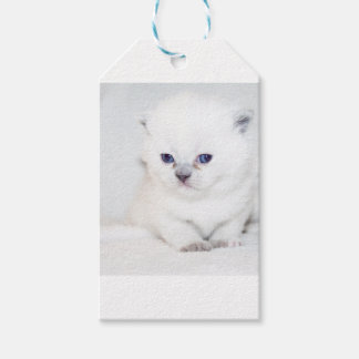 Süßes weißes Kätzchen Geschenkanhänger