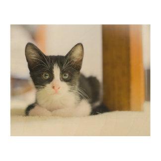 Süßes weißes und schwarzes Kätzchen Holzdruck
