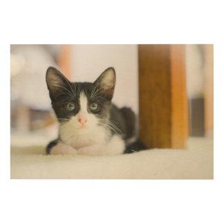 Süßes weißes und schwarzes Kätzchen Holzleinwand