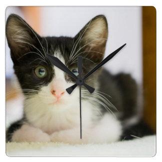 Süßes weißes und schwarzes Kätzchen Quadratische Wanduhr