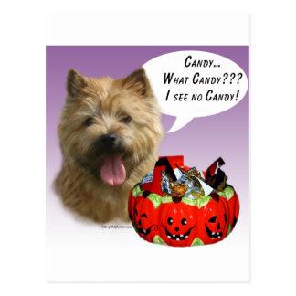 Süßigkeit Norwichs Terrier Halloween Postkarte