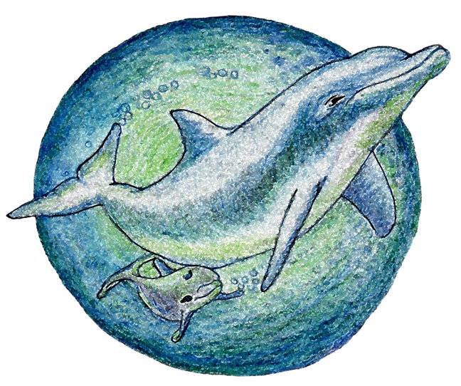 Dolphins `Mother & Calf'