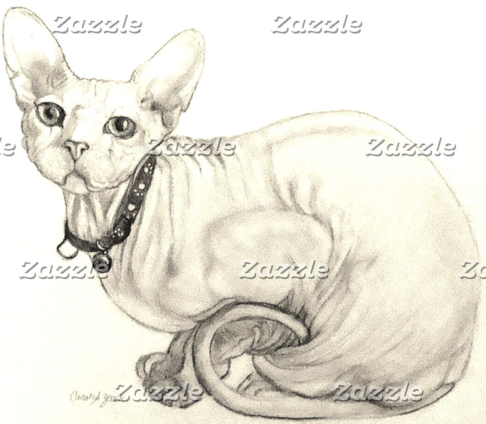 Cats  Sphynx