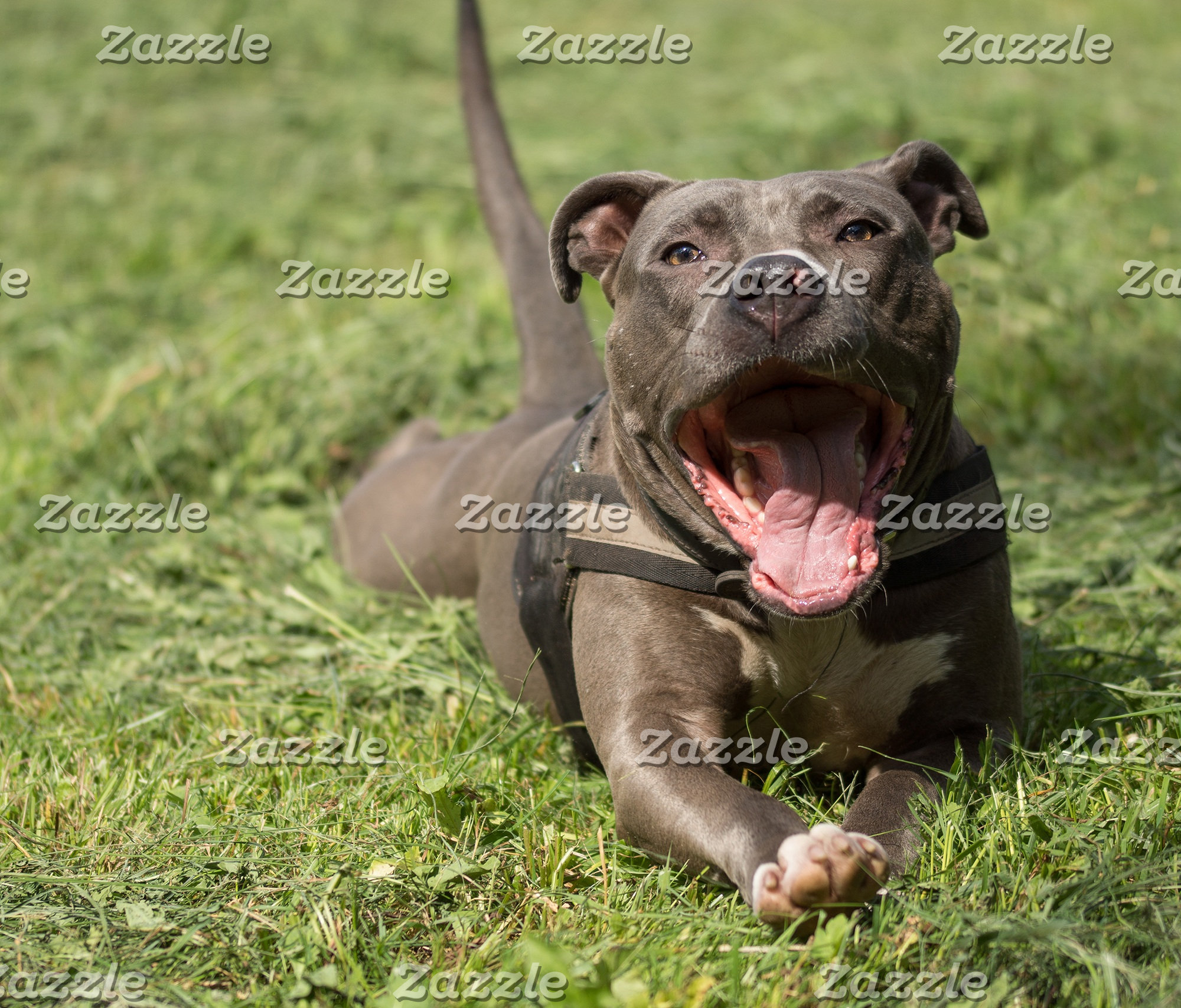 Brown Pitbull In Grass Design