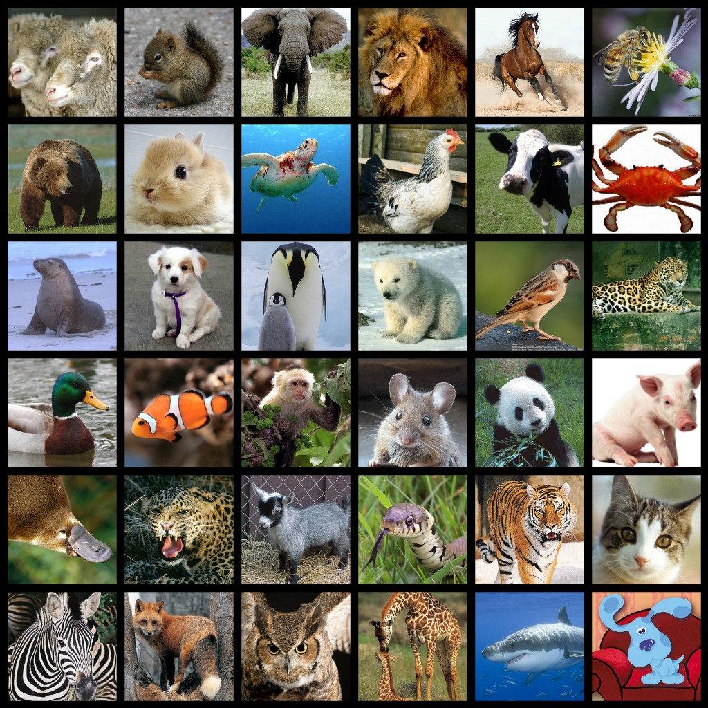 *Animals Prints