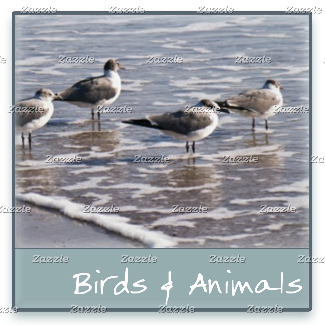 Birds & Animals