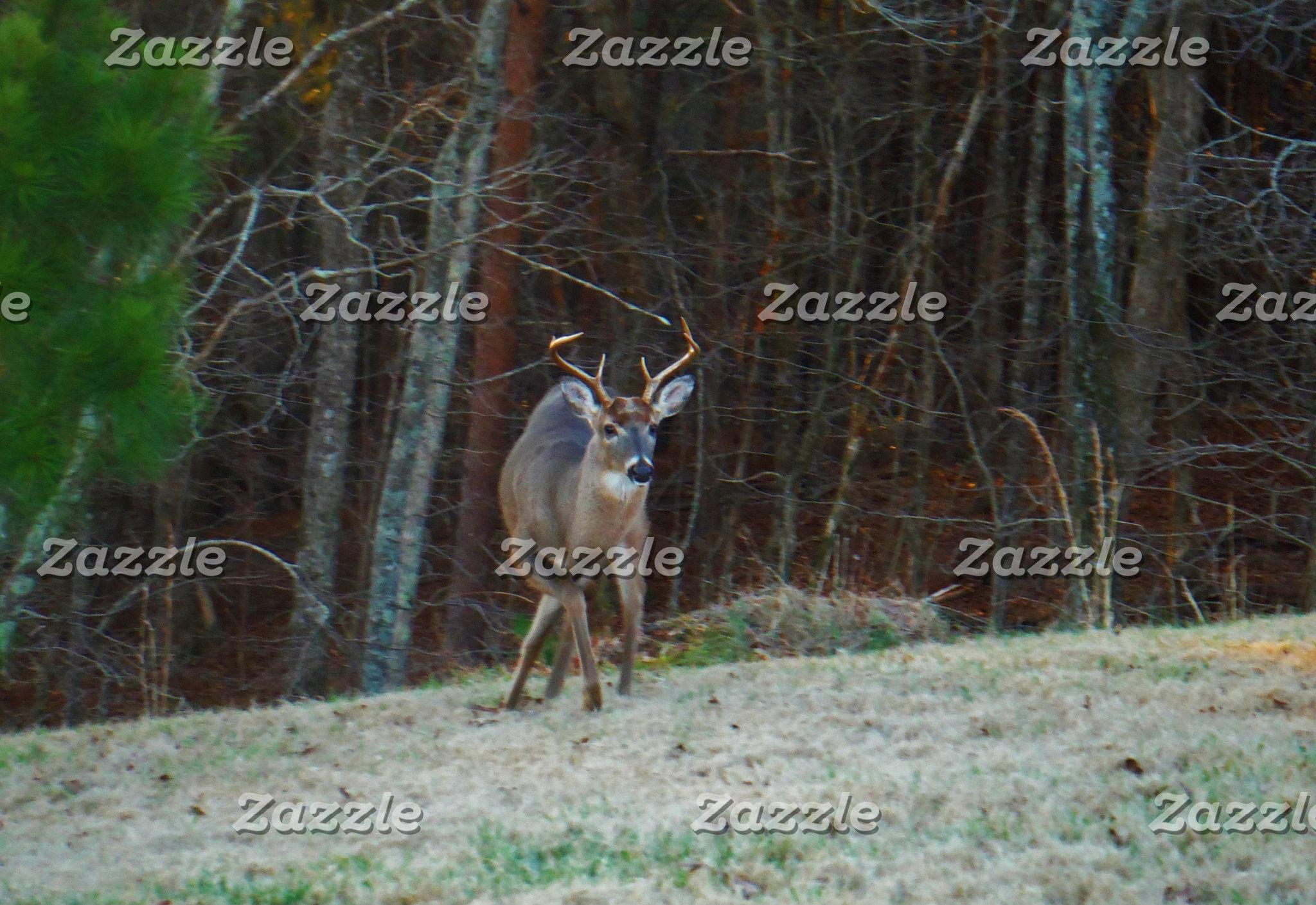 Buck Stag Deer, Marking his Ground