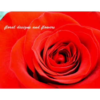 floral designs and  flowers