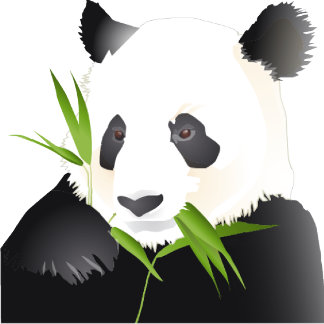 A Panda Bear